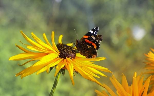 butterfly-5459476_1920