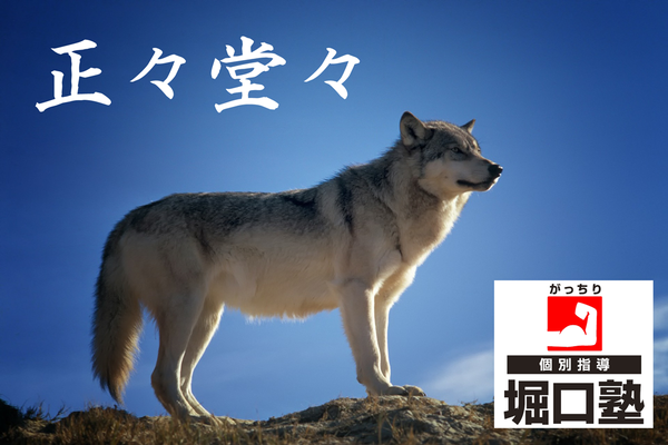 正々堂々wolf-142173_1920