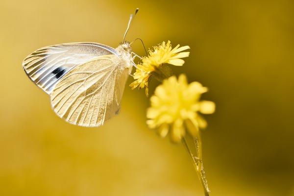 butterfly-5363370_1920