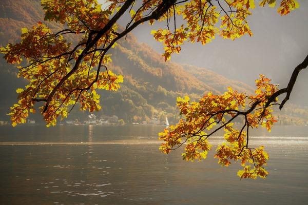 autumn-4465774_1920