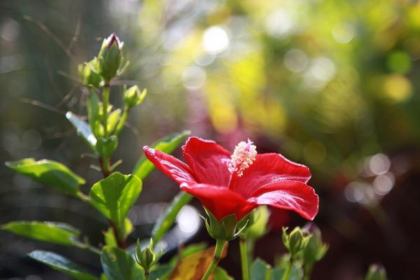 flowers-3773878_1920