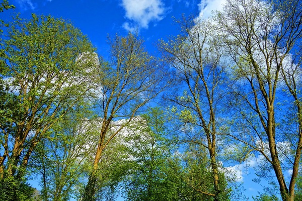 tree-3358897_1920