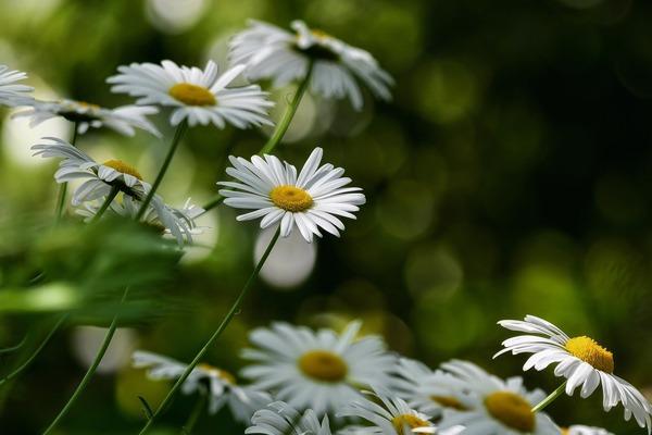 flowers-6300441_1920