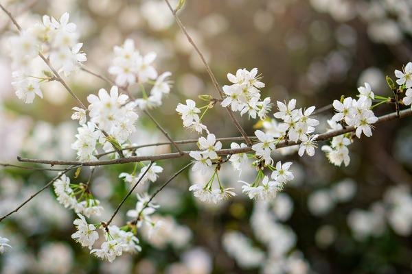 flower-6086288_1920