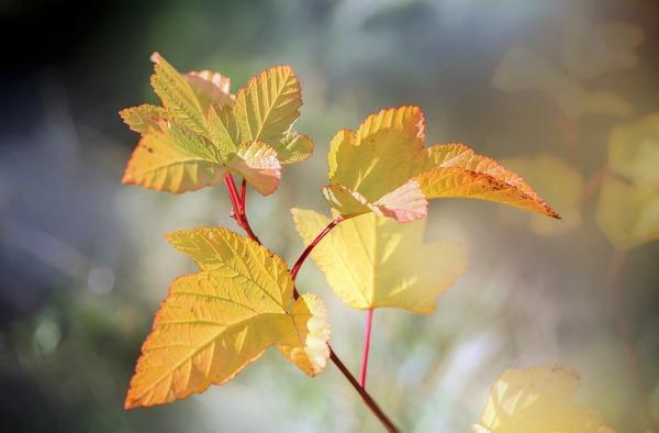 leaves-5717222_1920