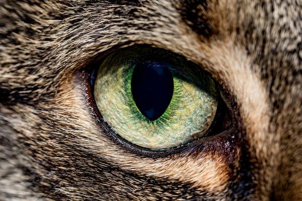 cat-4647339_1920