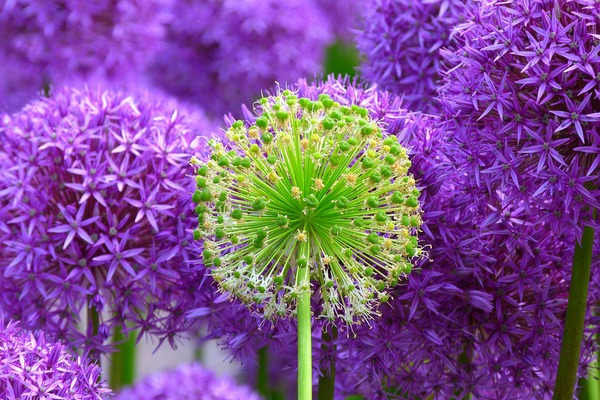 blossom-139356_1920
