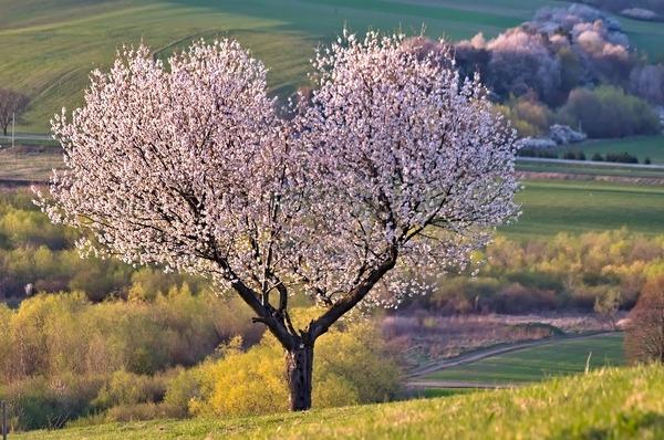 tree-5255288_1920