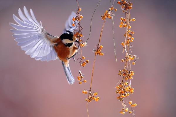 bird-1045954_1920