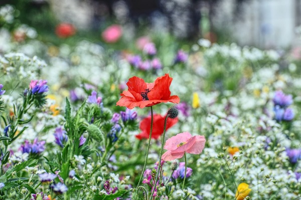 flower-meadow-5431038_1920
