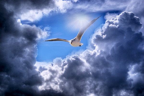 seagull-5434820_1920