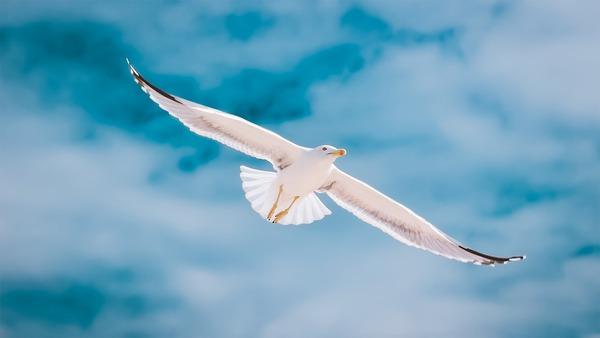 seagull-2444497_1920
