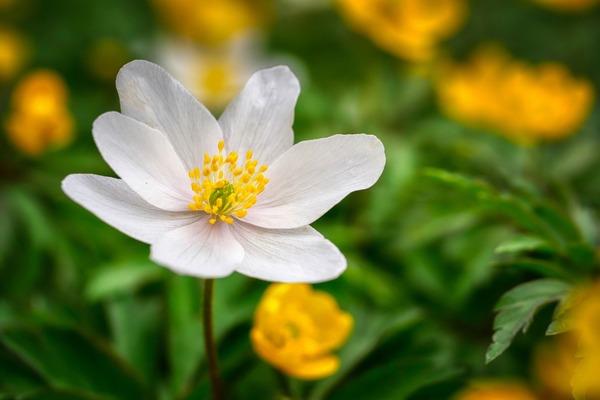 flower-6173483_1920