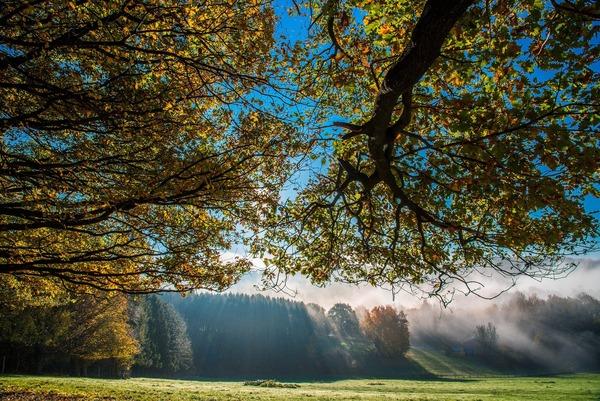 trees-5749406_1920