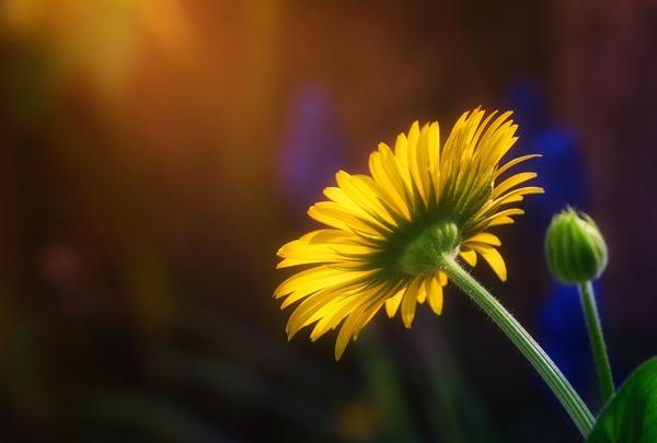 flower-5038110_1920