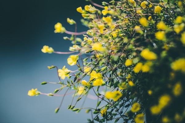 flowers-6552611_1920