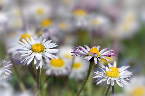 flowers-6188716_1920
