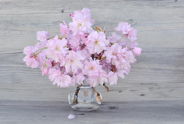 flowers-1381133_1920