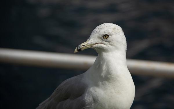 seagull-5884998_1920