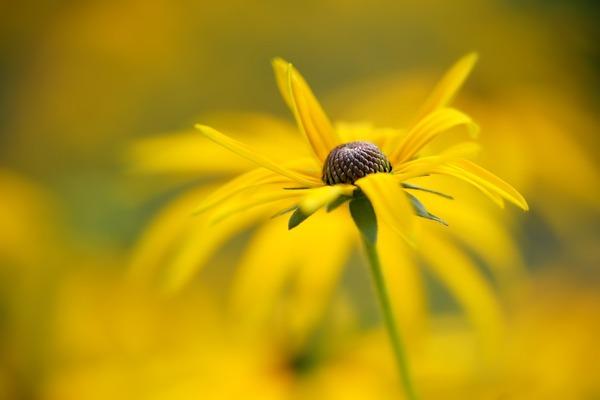 flower-6607529_1920