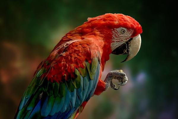 parrot-6342271_1920