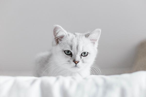 cat-6309964_1920