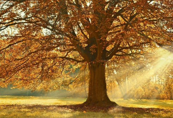 tree-4637270_1920