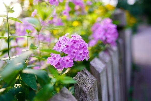 flower-5453072_1920