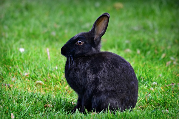 rabbit-4201218_1920