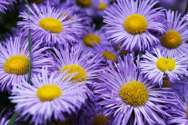 blue-flower-5337027_1920