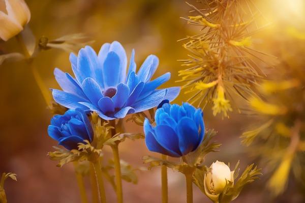 anemone-2396299_1920