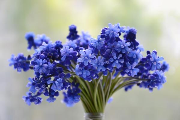 flowers-3453729_1920