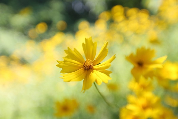 flowers-5443922_1920