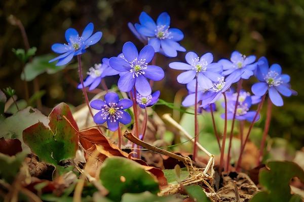 flower-3204966_1920