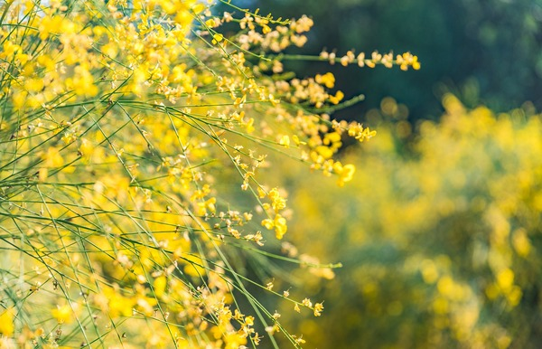 flower-4504952_1920