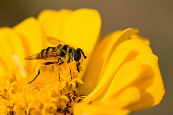 hoverfly-5749361_1920