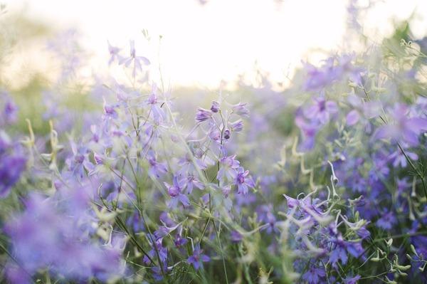 blooming-field-5304878_1920
