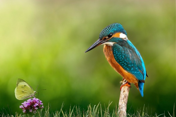 kingfisher-6159371_1920