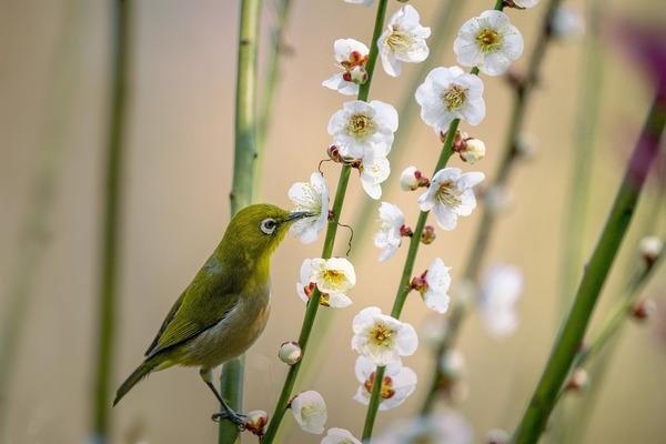little-bird-6036530_1920