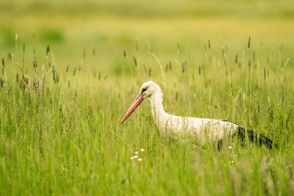 stork-6327150_1920