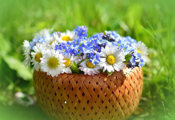 daisy-3382739_1920