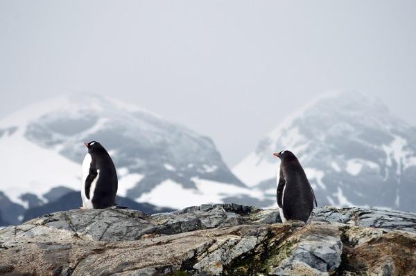 penguins-5602408_1920