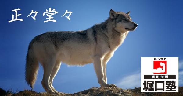 正々堂々2wolf-142173_1920