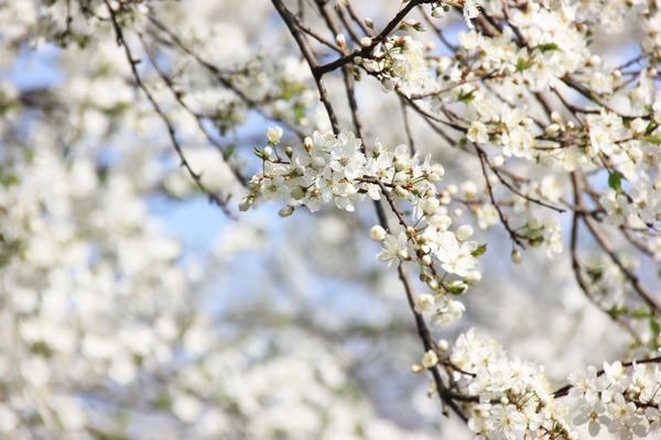 spring-3947898_1920