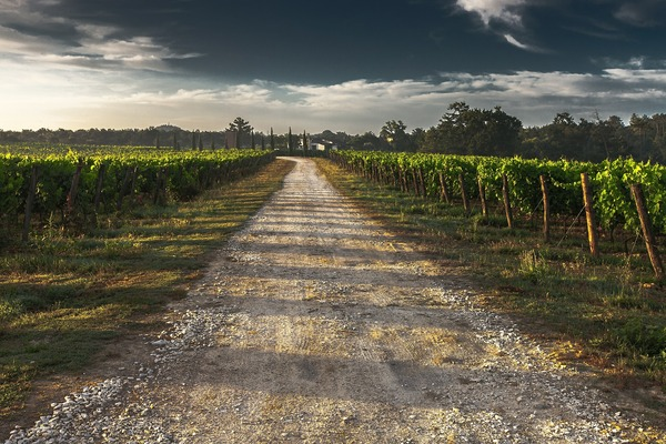 country-lane-428039_1920