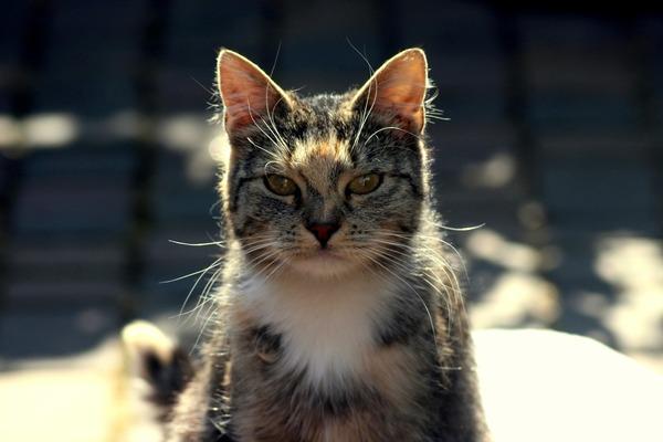cat-4339566_1920