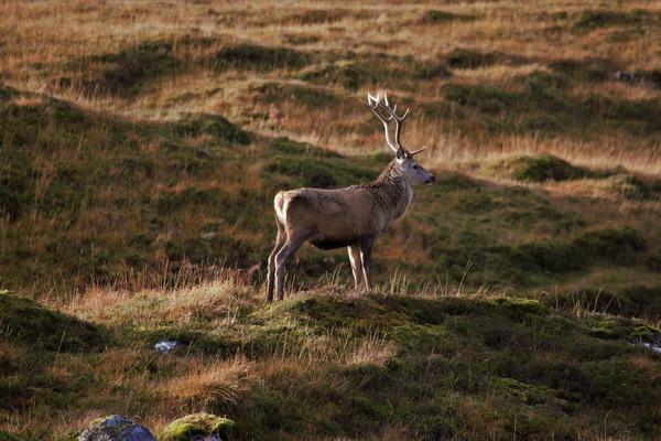 deer-5691010_1920