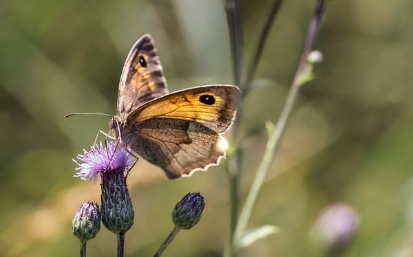 butterfly-6509025_1920