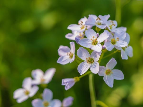 flower-4032528_1920