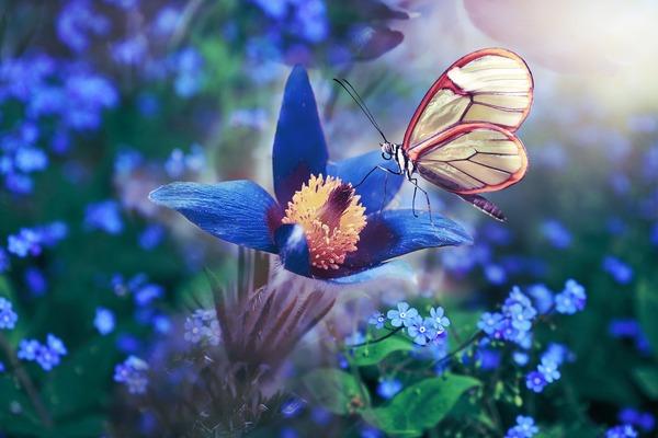 butterfly-4745902_1920